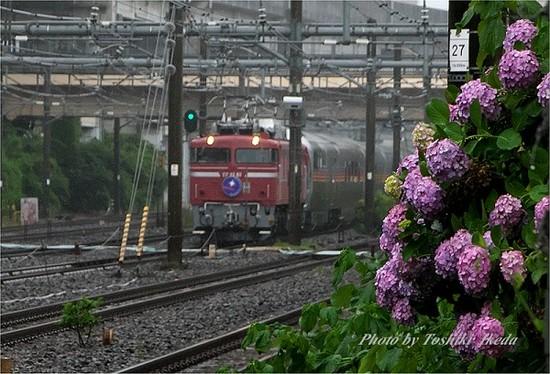 DSC_7422s.jpg